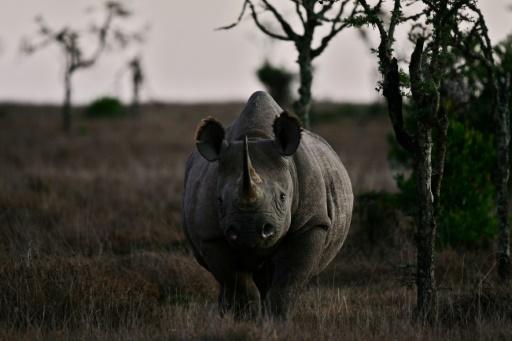 rhinocéros tanzanie