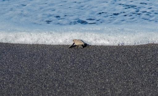 tortue costa rica