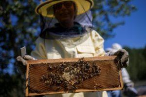 apiculteurs europeens abeilles annee noire