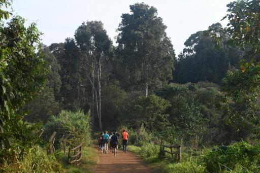forêt de Karura Nairobi