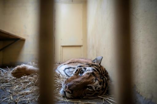 tigres solidarite pologne