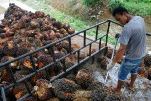 huile de palme amendes