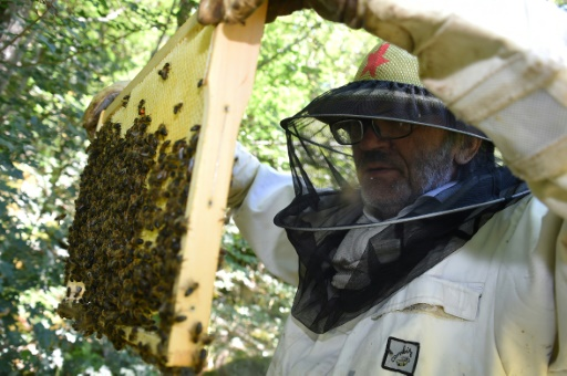 abeilles residus neonicotinoides dangers risques menance