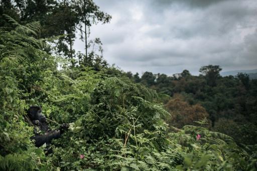 flore africaine extinction
