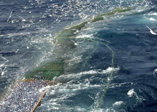 fin peche proteger dauphins ile de ré