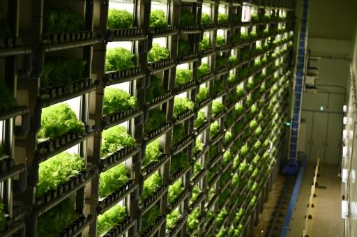 usines à légume