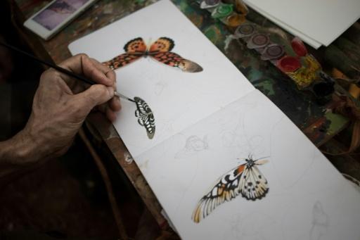 foret papillon centrafrique