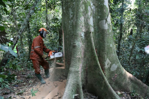 RDC déforestation