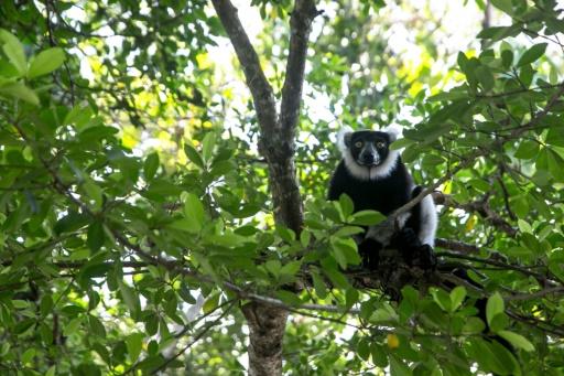 lemuriens madagascar changement climatique