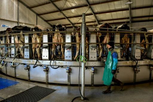 ferme des 1000 vaches