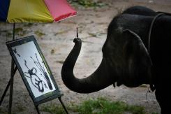 elephants thailande enfer