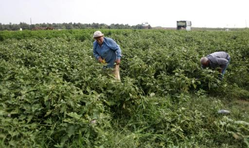 agriculteurs palestiniens