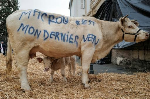 vache Manifestation Vesoul