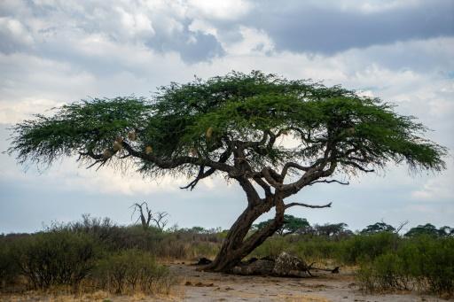 zimbabwe conflit faune secheresse