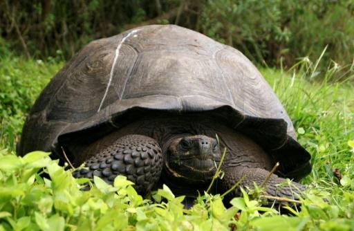 tortues géantes