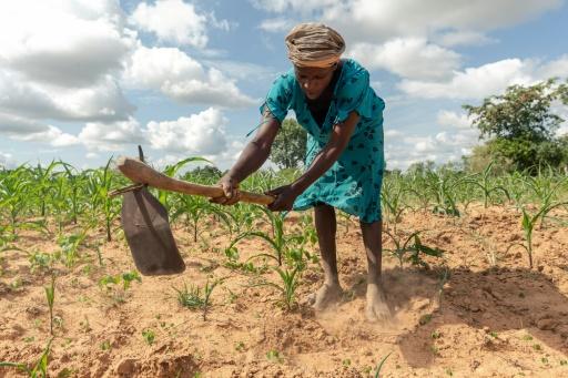 agriculture zimbabwe