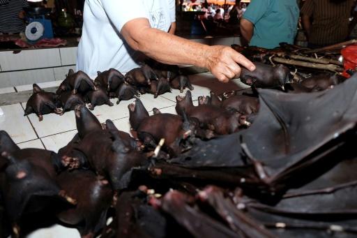 Chauve-souris sur un marché indonésien