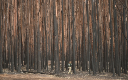 forêt de Kangaroo island