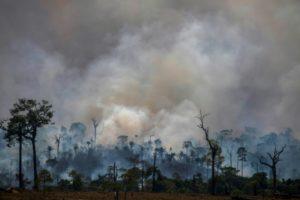 brésil deforestation amazonie reccord