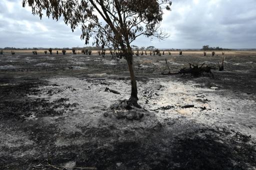 australie feux de foret pluies fin crise