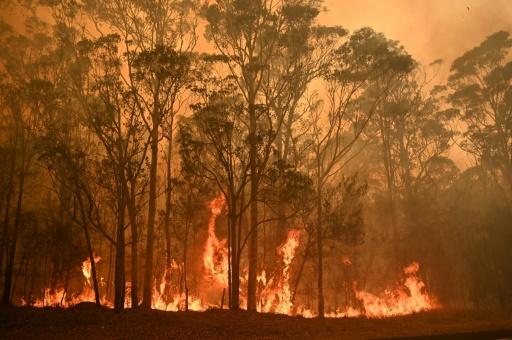 feu de forêt australie