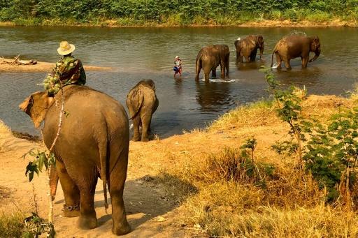 elephants tourisme thailande voronavirus