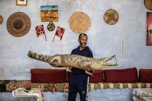 egypte crocodile empaillé