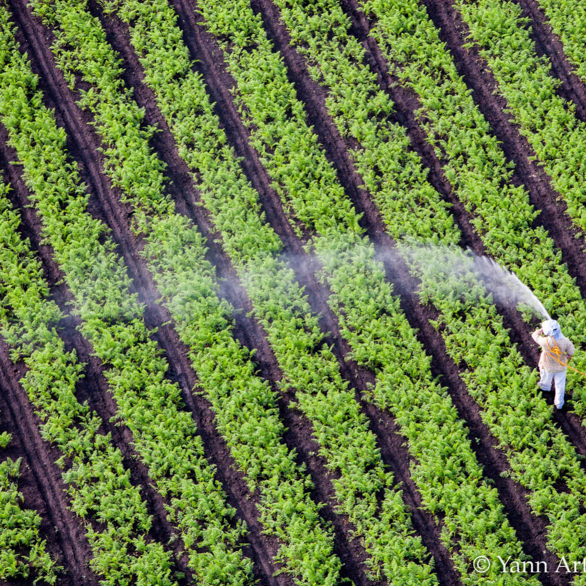 pesticides épandages prefets singanture ufc