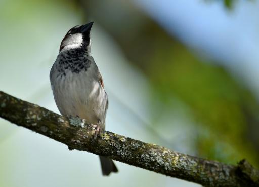 LPO confinement oiseaux