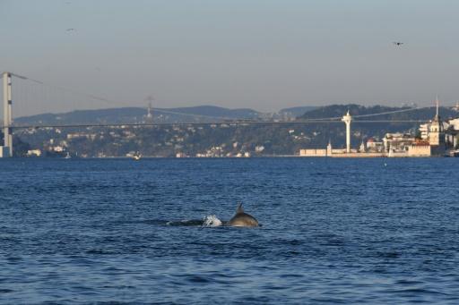 dauphins bosphore