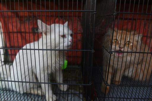 chiens chats vicitmes coronavirus covid