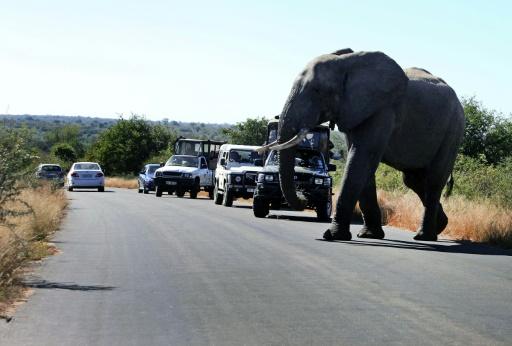afrique du sud tourisme pandemie animaux