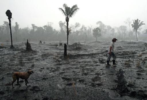 amazonie deforestation epidemie