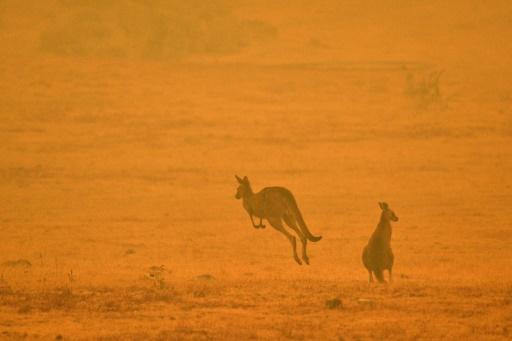 enquetes feux de forets australie