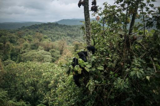deforestation recul foret afrique