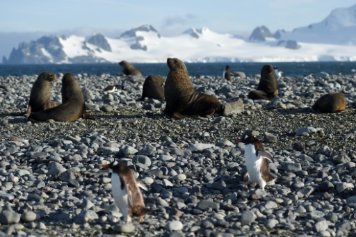 especes migration nord poles changement climatique