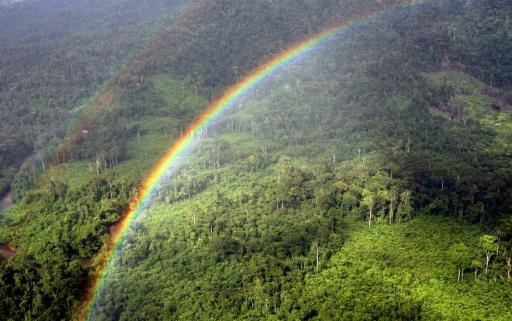 forêt tropical mettre du carbone recahuffement