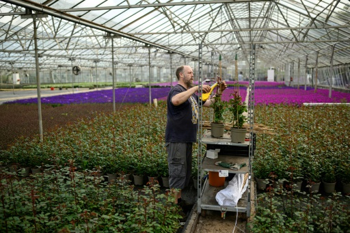 jardinage confinement britanniques