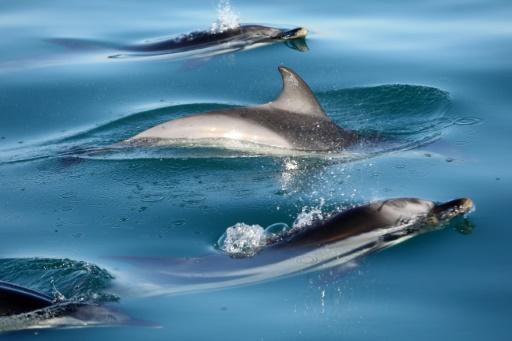 prise annexe dauphins mesures