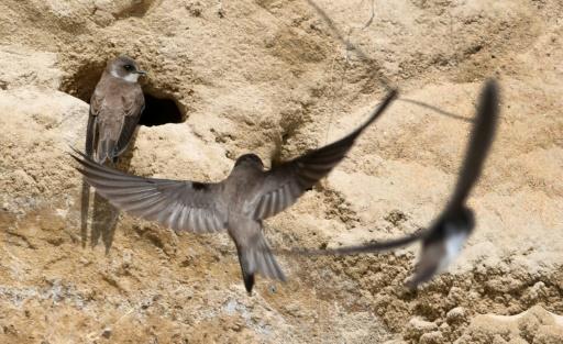 crozon déconfinement oiseaux litoral