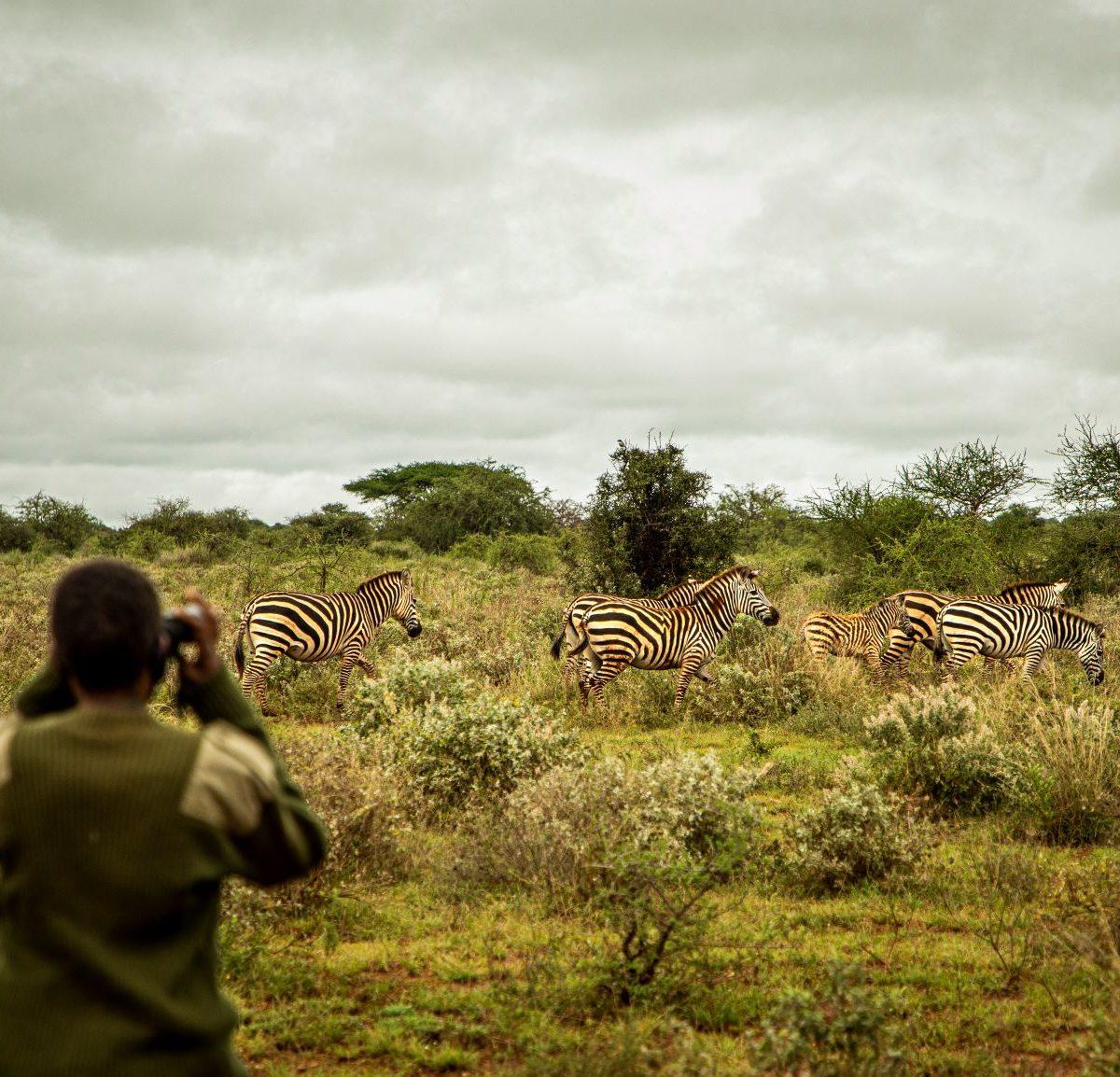 Les lionnes, écogardes massais, en train de surveiller des zébres dans le parc national d'amboseli au Kenya'© IFAW/Will Swanson