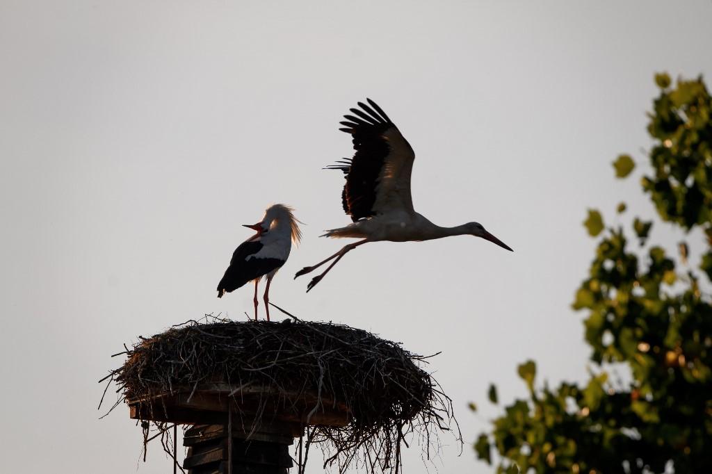 nids des oiseaux
