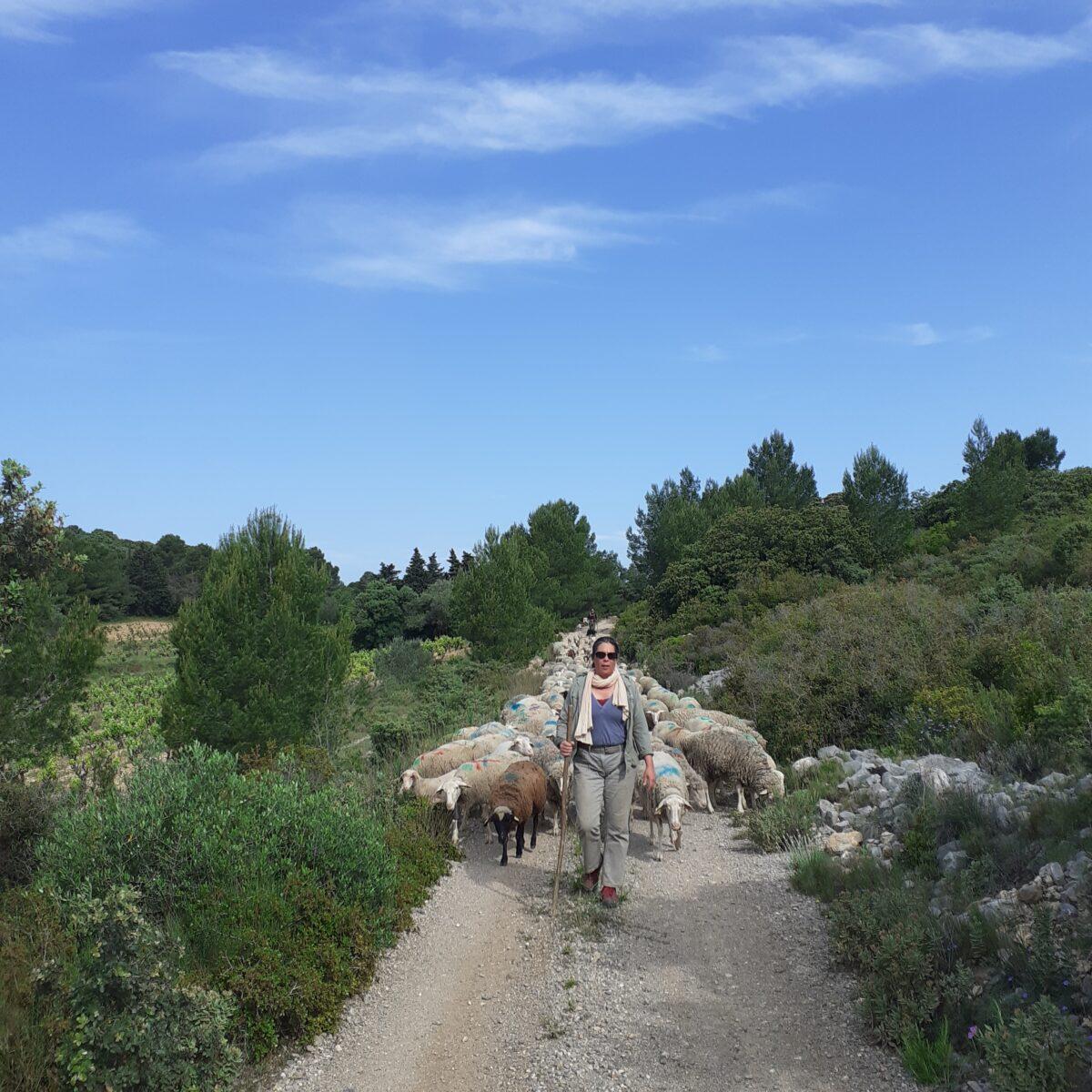 Florence Robert bergere des collines pastoralisme