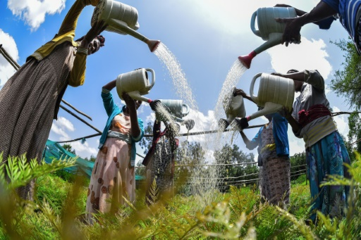 ethiopie reforestation