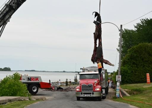 baleine montreal collision bateau