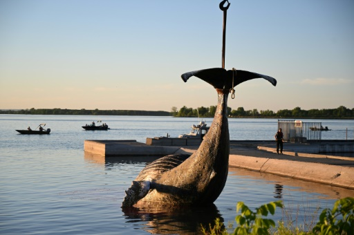 baleine à bosse saint laurent canada