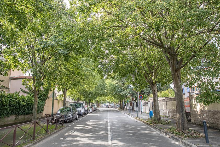 seine saint denis arbre 92 plantation naissance