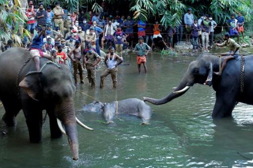 mort elephante inde
