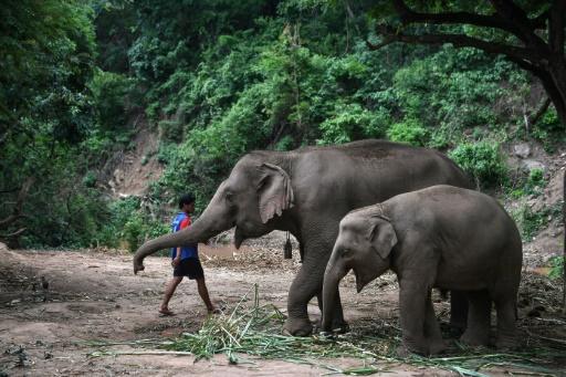 Éléphants Thaïlande mère enfant