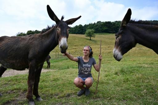 élever des ânes